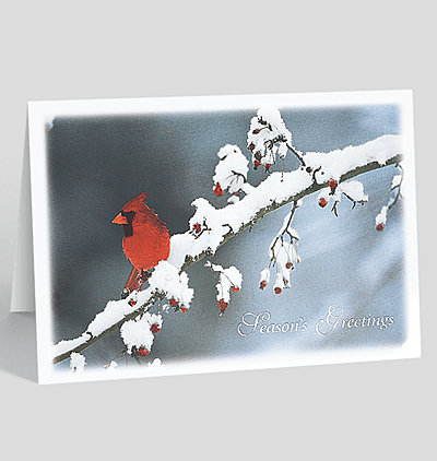 holiday cardinal christmas card - Christmas Card Sale