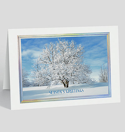 Freshly Fallen Snow Holiday Card