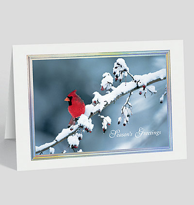 Cardinal Greetings Holiday Card